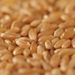 Quanto è importante la produzione della pasta biologica?