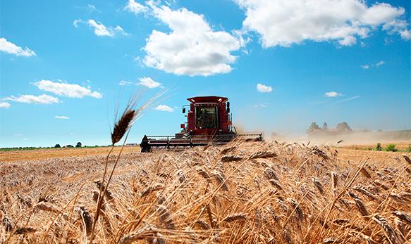 intervista-agricoltura-biologica-sfide