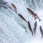 Salmone, re del Nord